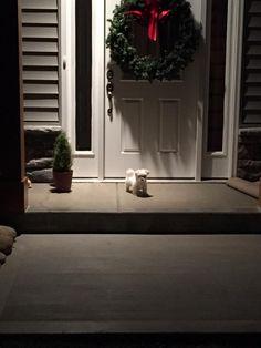 Guard dog http://ift.tt/2wznaWm