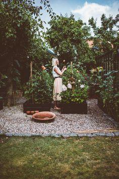 Balcony Plants, Garden Plants, Green Garden, Vegetable Garden, Dream House Exterior, My Secret Garden, Go Green, Garden Inspiration, Outdoor Gardens
