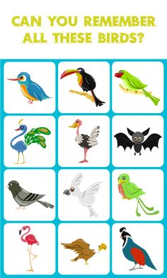 Birds Match: Memory Game is a concentration-style educational memory game for… Educational Games For Kids, Educational Toys, Shapes For Kids, Memory Games For Kids, Rhyming Words, Birds, Memories, Puzzles, Teaching Ideas