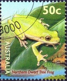 """Issued of October Northern Dwarf Tree Frog """"Litoria bicolor"""" Amphibians, Reptiles, Dwarf Trees, Pond Life, Australia Map, Australian Animals, Tree Frogs, Animals Images, Stamp Collecting"""