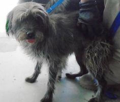 Animal ID\t34208627 \r\nSpecies\tDog \r\nBreed\tTerrier\/Mix \r\nAge\t1 day \r\nGender\tFemale \r\nSize\tSmall \r\nColor\tBlack \r\nSpayed\/Neutered\t \r\nSite\tCity of El Paso Animal Services \r\nLocation\tKennel A \r\nIntake Date\t12\/13\/2016 \r\n