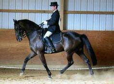 JoPa's Tycoon - Standardbred pacing bred dressage horse (Prix St George)