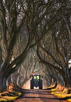 Dark Hedges - County Antrim - Ballymoney - Northern Ireland