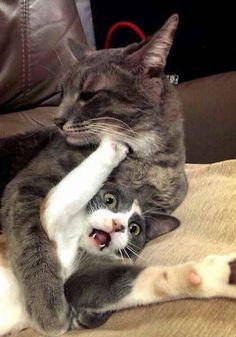 #Cats #Cat #Kittens #Kitten #Kitty #Pets #Pet #Meow #Moe #CuteCats #CuteCat #CuteKittens #CuteKitten #MeowMoe WWE ... https://www.meowmoe.com/91574/