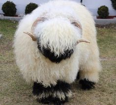 137 Best Black Nose Sheep Images Sheep Valais Blacknose