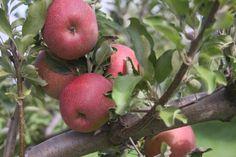 Fall Tasks: Harvest, Store & Plant | The Old Farmer's Almanac