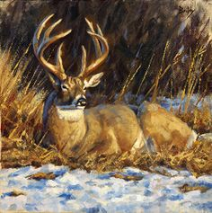"""Evening Sun"" - deer painting by BRANDON BAILEY Oil ~ 12"" x 12"""