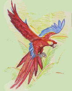 Desenho a lápis aquarelável: arara-vermelha, também chamadaararacanga, aracanga, arara-macau, arara-verde, ararapiranga e macau, é uma ave psitaciforme, nativa das ...