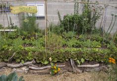 #ortiurbani #organicfood #bio #vegetable #vegetarian #organicvegetables #urbanfarming #mygarden #ortogenuino #km0  #ortiadomicilio #orto #biologico