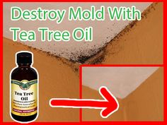How To Naturally Remove Mold With Tea Tree Oil