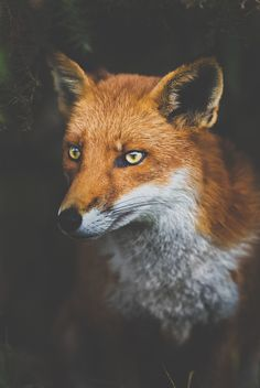 """He was a fox like a hundred thousand other foxes. But I have made him my friend, and now he is unique in all the world."" ― Antoine de Saint-Exupéry, The Little Prince"