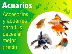 Acuarios. Accesorios y acurios para tus peces al Mejor Precio.