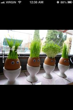 cute idea,  put eggs in the egg carton and line up by the window