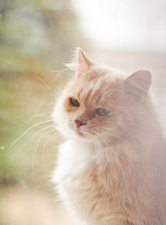 So sweet Cat