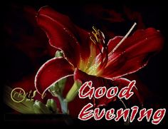 198 Best Good Evening Images In 2019 Buen Dia Good Morning Good