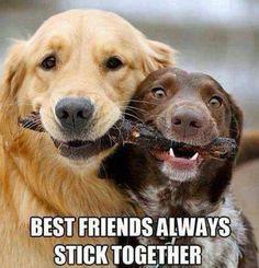 Dog Humor #2