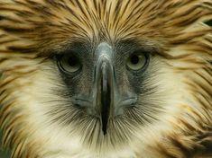 Yes, It Is Okay To Be A Hawk!!