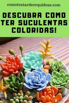 Top 10 Suculentas from Mini Cactus Garden, Cactus House Plants, House Plants Decor, Cactus Flower, Plant Decor, Cactus Terrarium, Cactus Cactus, Cactus Decor, Types Of Succulents Plants