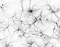 neuron tattoo - Google Search