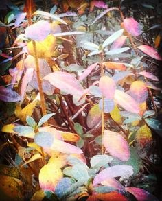 winter's pastel blooms