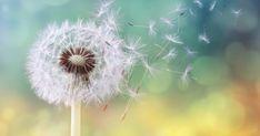 Οι αλλεργίες της άνοιξης και πώς αντιμετωπίζονται με βελονισμό