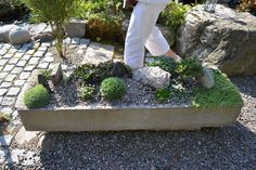 fin sten Sprouts, Vegetables, Plants, Vegetable Recipes, Plant, Veggies, Planets