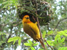 Bird and Nest at Animal Kingdom