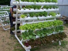 Horta vertical feita com canos