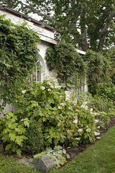 Wisteria Vines  - CountryLiving.com