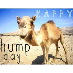 Good Morning Guess What Day It Is. Yep Hump Day! | Quotes ...