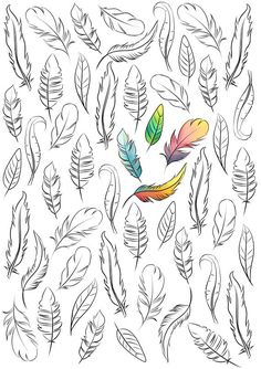 Adult coloring page boho coloring page feather coloring