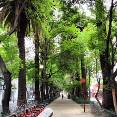 Condesa, Mexico City, Mexico México City, Ancient Ruins, Spanish Colonial, Gulf Of Mexico, Yearning, Mexico Travel, Travel Abroad, World Traveler, Central America