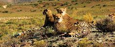 Sanbona Wildlife Reserve Südafrika - hier kann man in einem malariafreien Reservat nah bei Kapstadt die Big Five sehen
