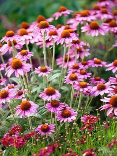 These perennials are super tough! They will last through the harshest conditions, including drought and poor soil. Check out our favorite power perennials that are perfect for beginning gardeners. These low maintenance flowers and blooms easily thrive.