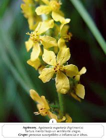 Manual Flores Bach: ALBUM FOTOS FLORES BACH Scrapbook Albums, Natural, Health, Color, Flower, Remedies, Pictures Of Flowers, Vegetable Gardening, Flowers