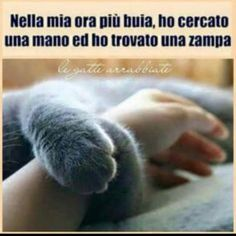 Amore che solo un animale può dare. 5 Best Friends, Dog Friends, Cat Quotes, Funny Quotes, Animals And Pets, Cute Animals, Animal Totems, Fluffy Cat, I Love Cats