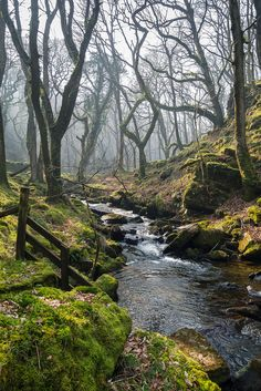 Dartmoor, Devon, England by Oaktor-Photography
