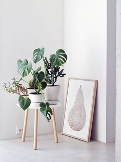 Little white coffee table (musta ovi) Monstera Deliciosa, Philodendron Monstera, Interior Plants, Interior And Exterior, Decoration Plante, Deco Design, Little White, Green Plants, Home Decor Inspiration
