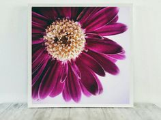Close-up Flower Chrysanthemum Print Instant by CristylClear
