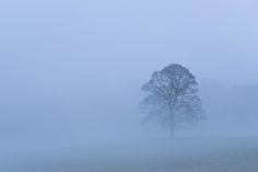 Savernake Dawn | por George-Edwards