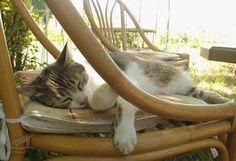 Aux Chats Dormants Visites à domicile