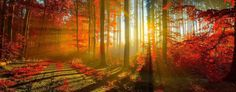 Beautiful Cover for Facebook Pages | Quotes About Relaxing Autumn Leaves Wallpaper, Forest Wallpaper, Fall Wallpaper, Nature Wallpaper, Beautiful Wallpaper, Autumn Scenery, Autumn Nature, Autumn Fall, Autumn Forest