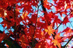30 Photos That Prove the South Korea Autumn Just Won at Life Autumn In Korea, Cities In Korea, Yellow Tree, Jeju Island, Hidden Beach, Photo Essay, Fall Photos, Color Stories, American Idol