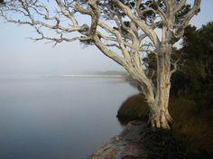 Walpole River, Western Australia