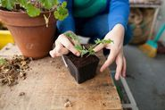 Starting my own little herb garden! For apartments and container gardening! Fall Container Plants, Container Herb Garden, Fall Plants, Lawn Care Tips, Chicken Garden, Fall Vegetables, Autumn Garden, Garden Planning, Vegetable Garden
