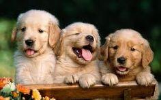 3 cute puppies <3 <3