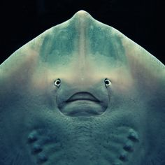 Here's A Stingray Who's Tired Of Taking All The Pictures Instead Of Getting To Be In Them