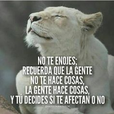 Reflection images with phrases Spanish Inspirational Quotes, Spanish Quotes, Positive Thoughts, Positive Quotes, Movie Quotes, Life Quotes, Quotes En Espanol, Motivational Phrases, Life Motivation