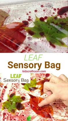 LEAF SENSORY PLAY BAGS - a fantastic mess free Fall sensory play activity for kids. This sensory play idea lets kids natural leaves in a fun and interesting way. A Fall activity for toddlers and preschoolers. Such a fun Autumn sensory play idea. Fall Activities For Toddlers, Toddler Learning Activities, Fall Crafts For Kids, Infant Activities, Nature Activities, Sensory Play For Toddlers, Thanksgiving Activities, Toddler Sensory Bins, September Kids Crafts