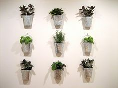 I'm going to do this with tin cans & herbs!